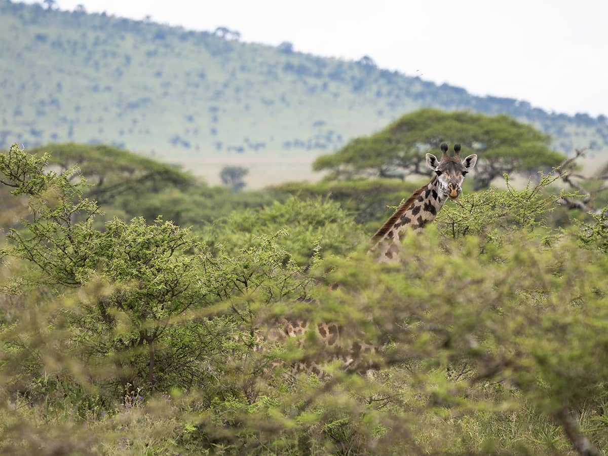 """I'm in awe of the wildlife we saw in the Serengeti."""