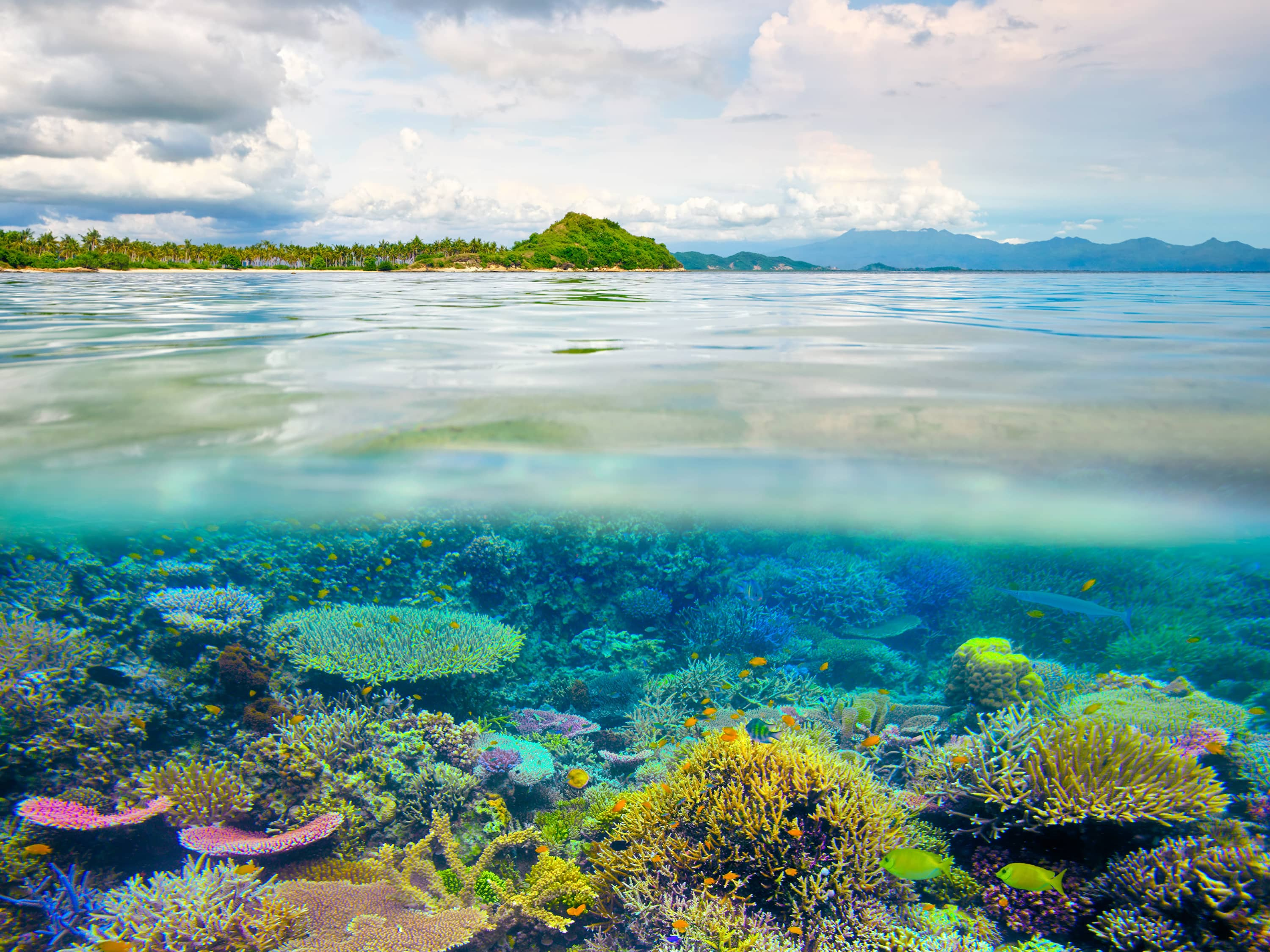 Marvel at the Splendour of the Great Barrier Reef