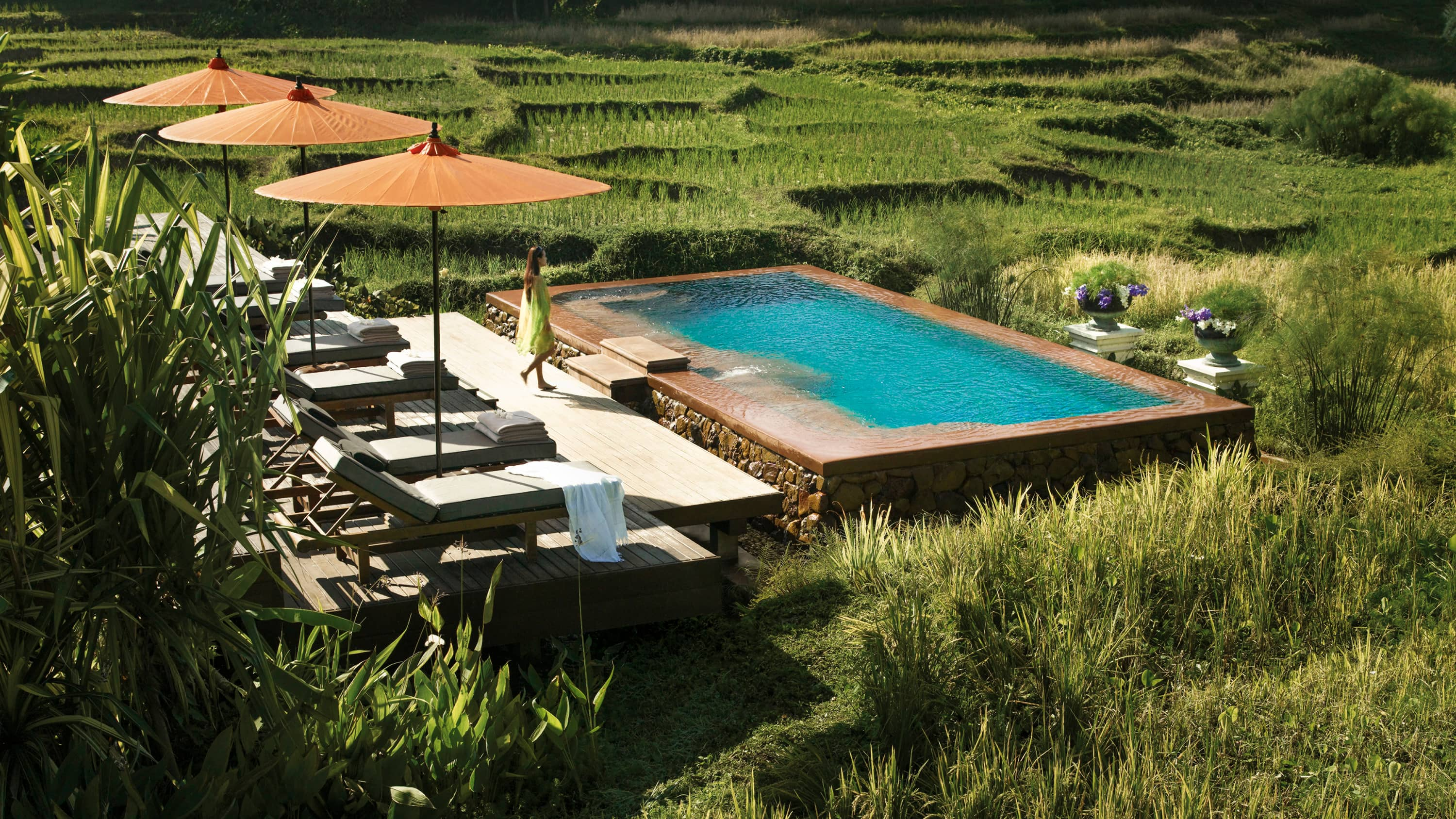 Four Seasons Chiang Mai pool surrounded by rice fields