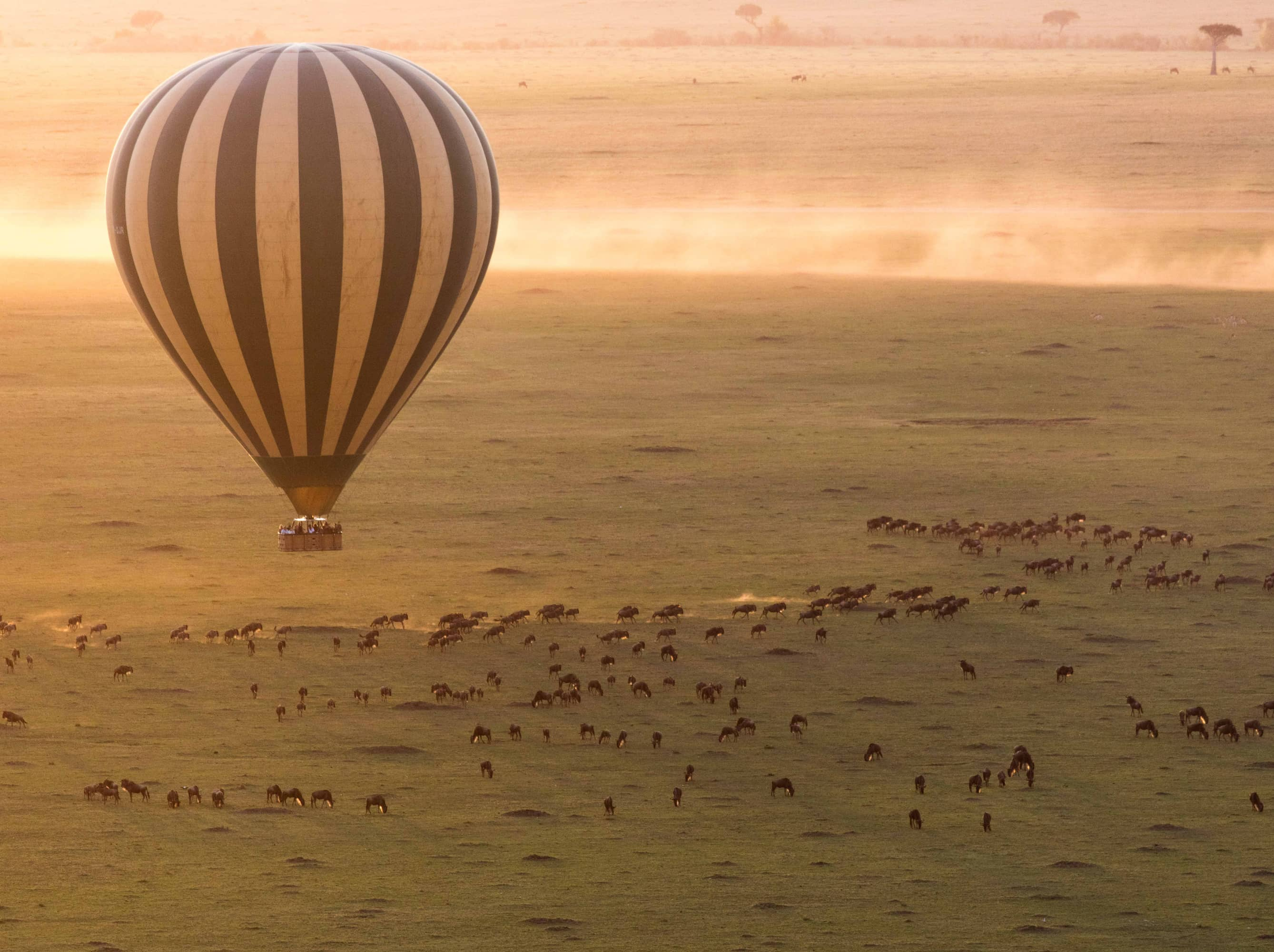 Experience an unforgettable sunrise safari from the sky