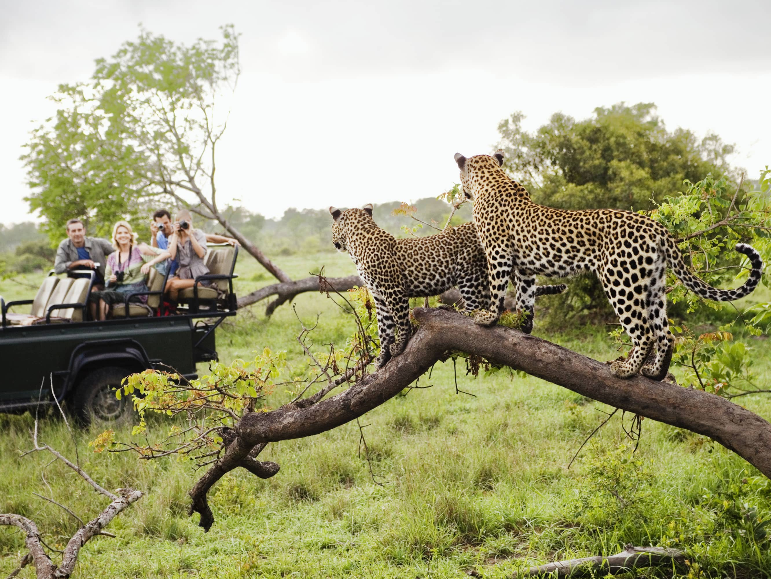 OPT FOR A CLASSIC SAFARI EXPERIENCE