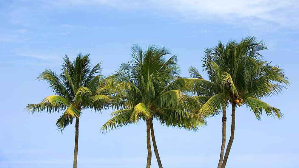 Palm Beach Rich Families