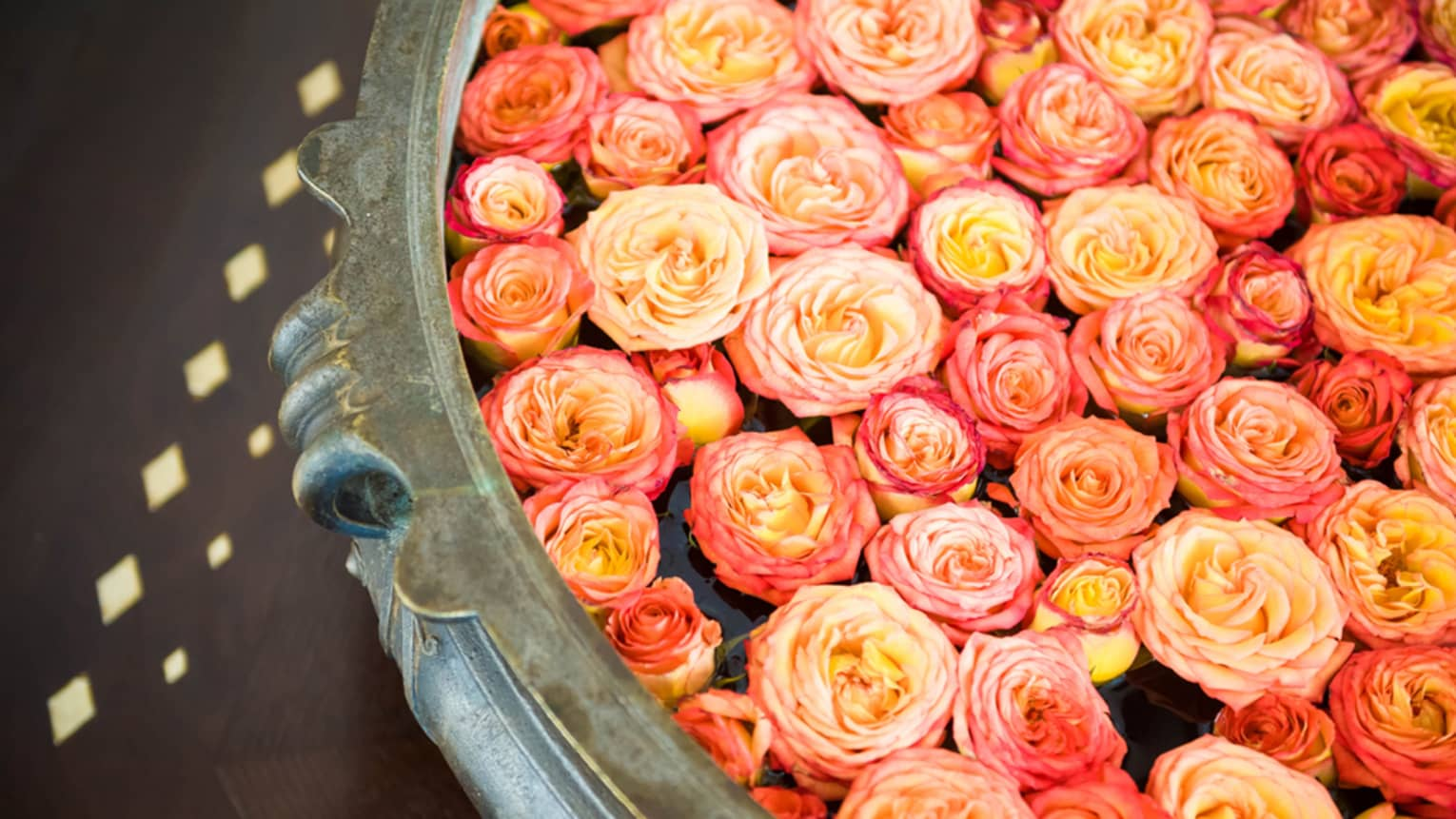 A decorative bowl of water with dozens of small, floating pink-and-yellow rose heads