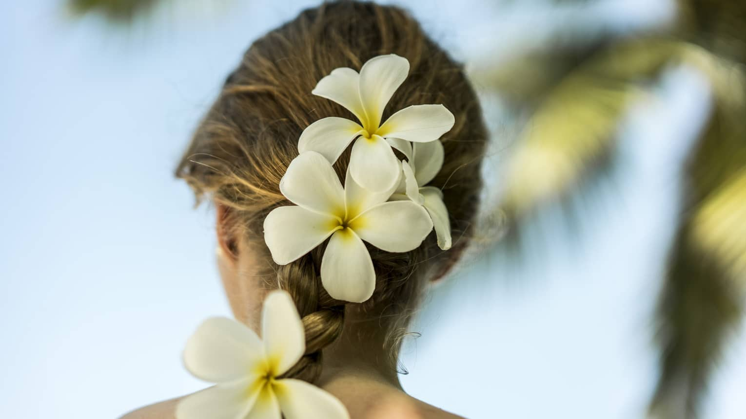 Back of woman's hair with tropical white flowers