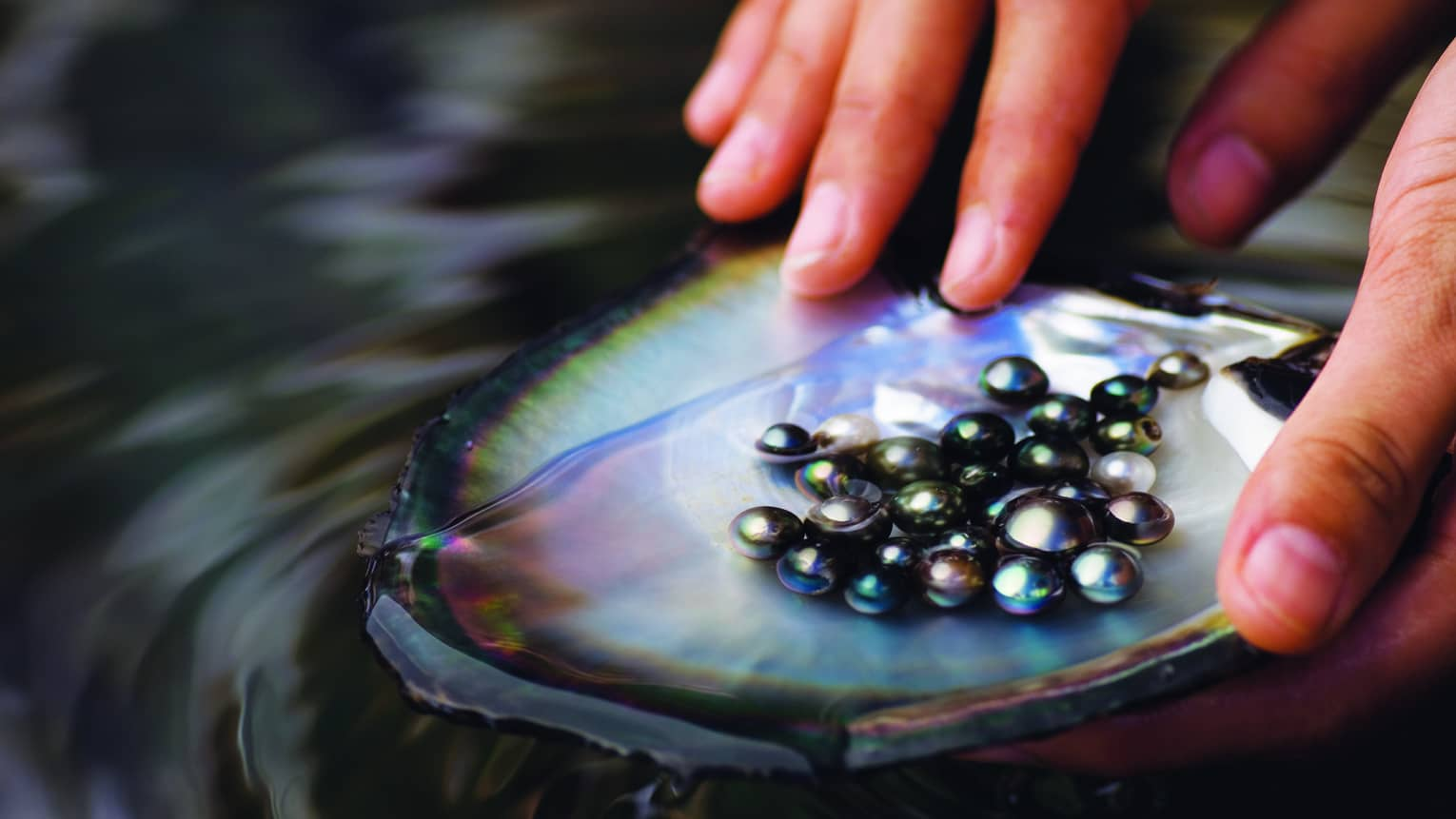 Tahitian black pearls being washed in Bora Bora's shop Tahia