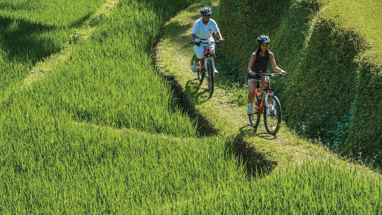 Smiling man and woman on red bicycles, wearing helmets ride along green path is grassy rice field
