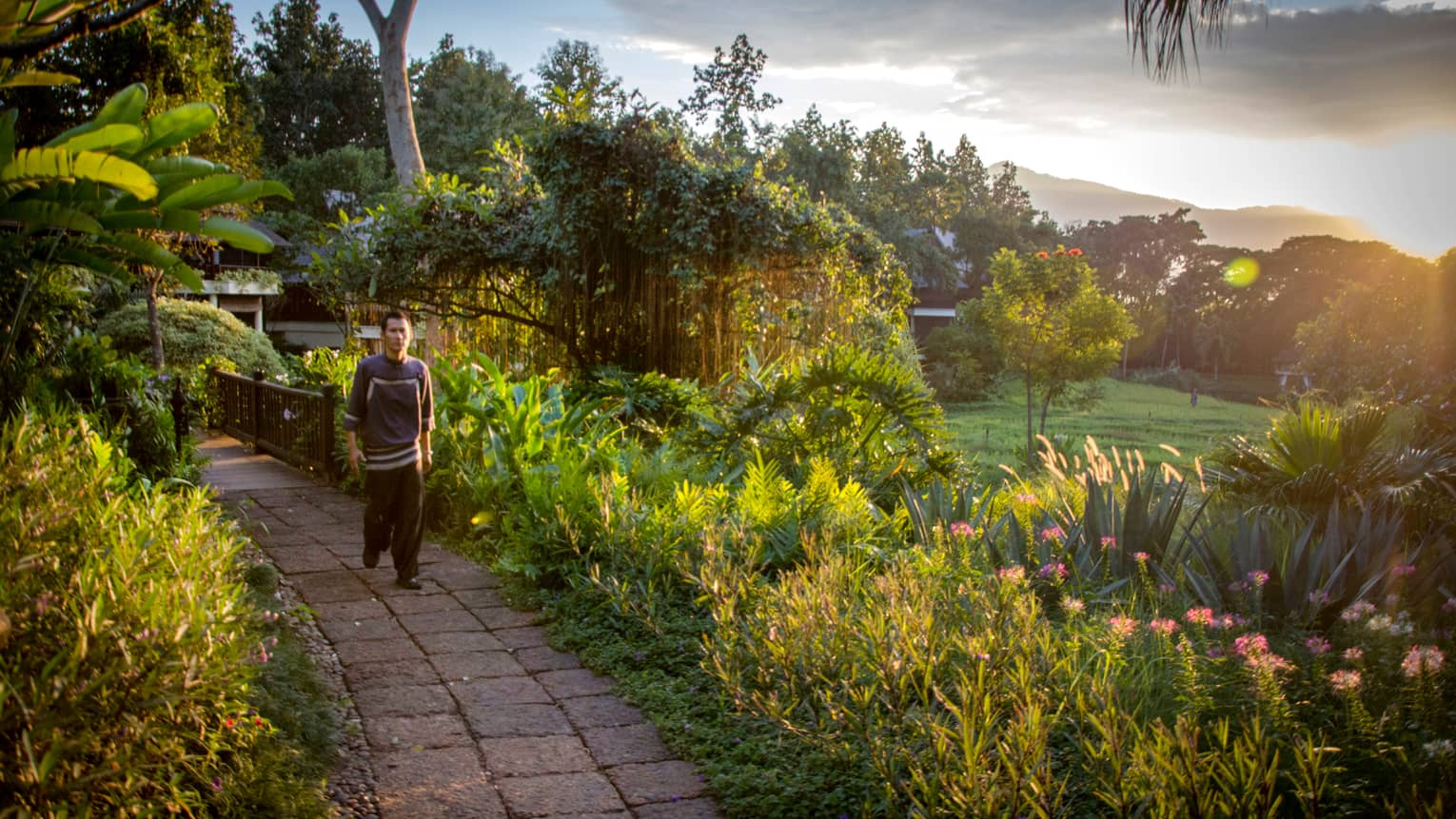 Man walks down brick path past tropical plants, garden and rice plantation fields at sunrise
