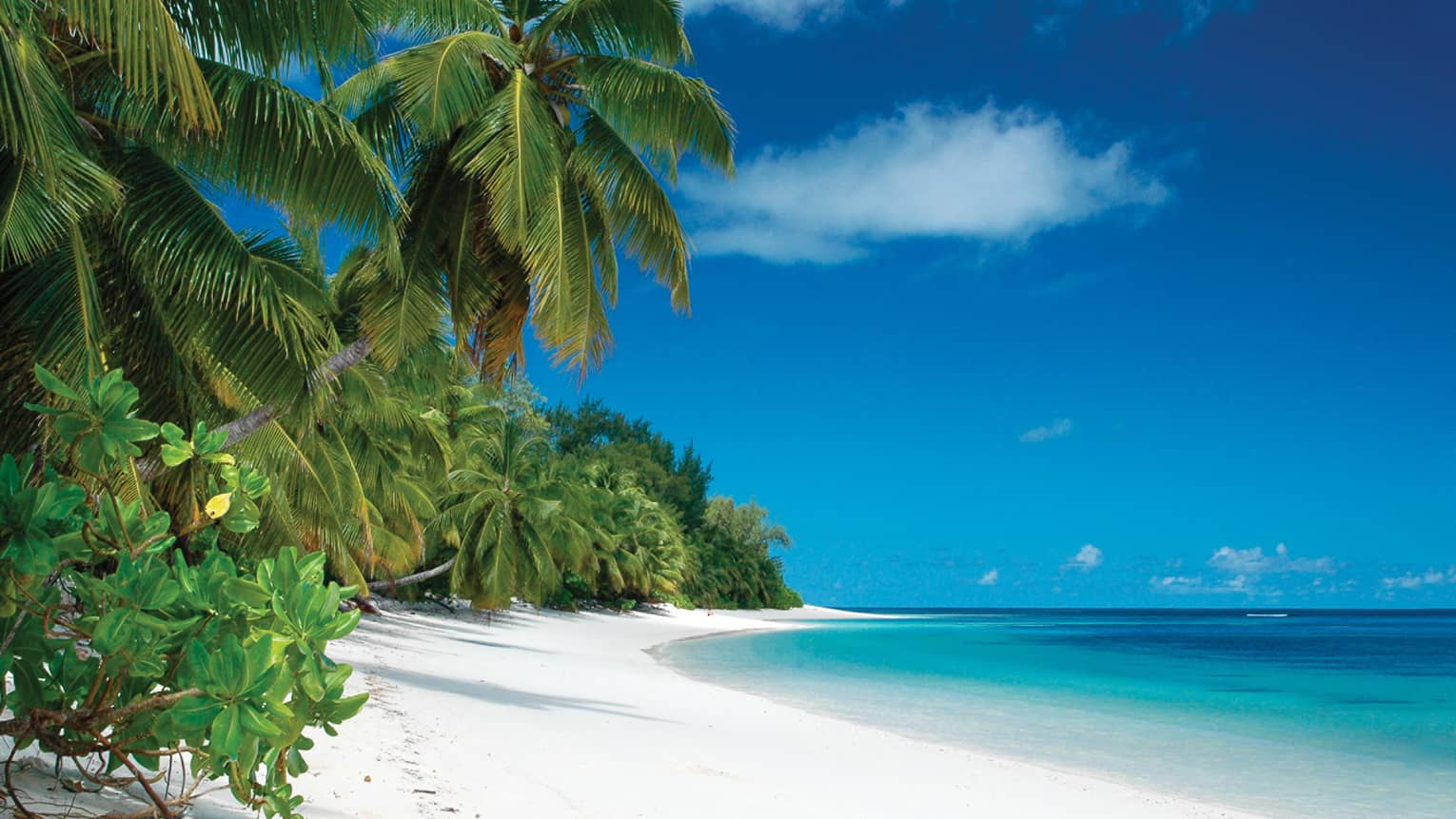 Green  tropical plants and large palms over white sand beach, bright blue ocean