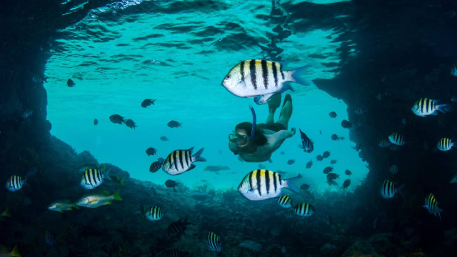 Underwater view of tropical fish in lagoon