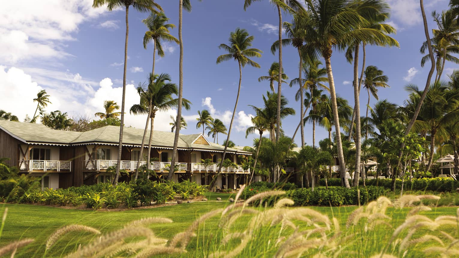 Tall palm trees blow in breeze over Four Seasons Resort Nevis, green lawn