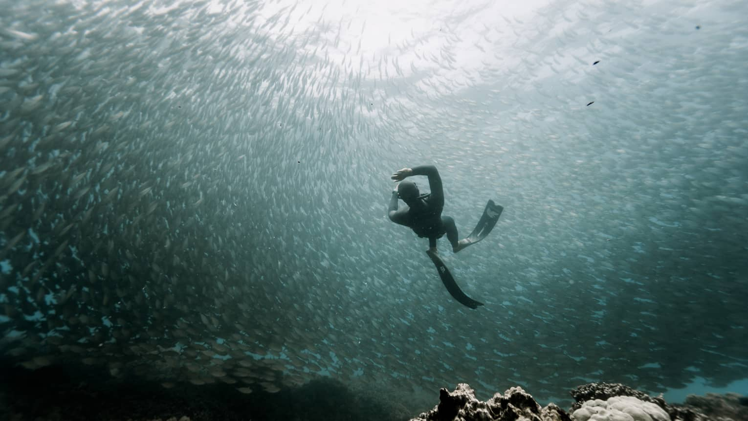 Silhouette of scuba diver in wetsuit, fins underwater with large school of fish