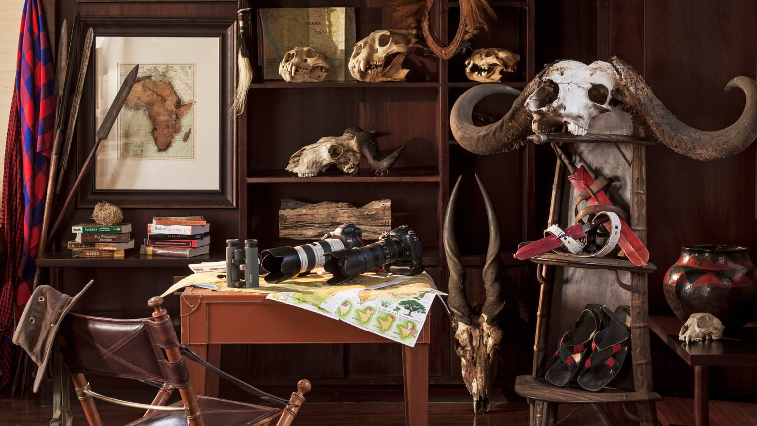 Two cameras with telephoto lenses, binoculars on Discovery Centre table, skulls