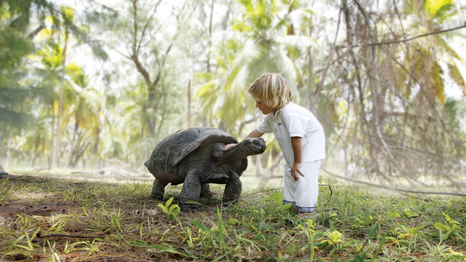 Young child in white shirt and pants pets large tortoise on grass