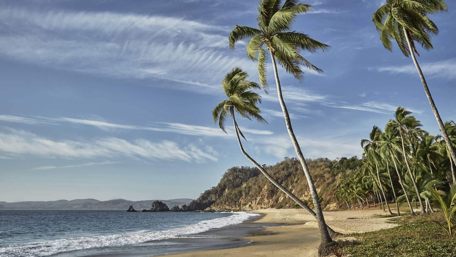 Sandy beach with tall palm trees in Tamarindo, Mexico
