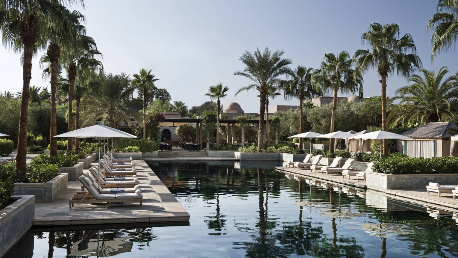 Tall palm trees over outdoor swimming pool and patio with rows of lounge chairs, umbrellas