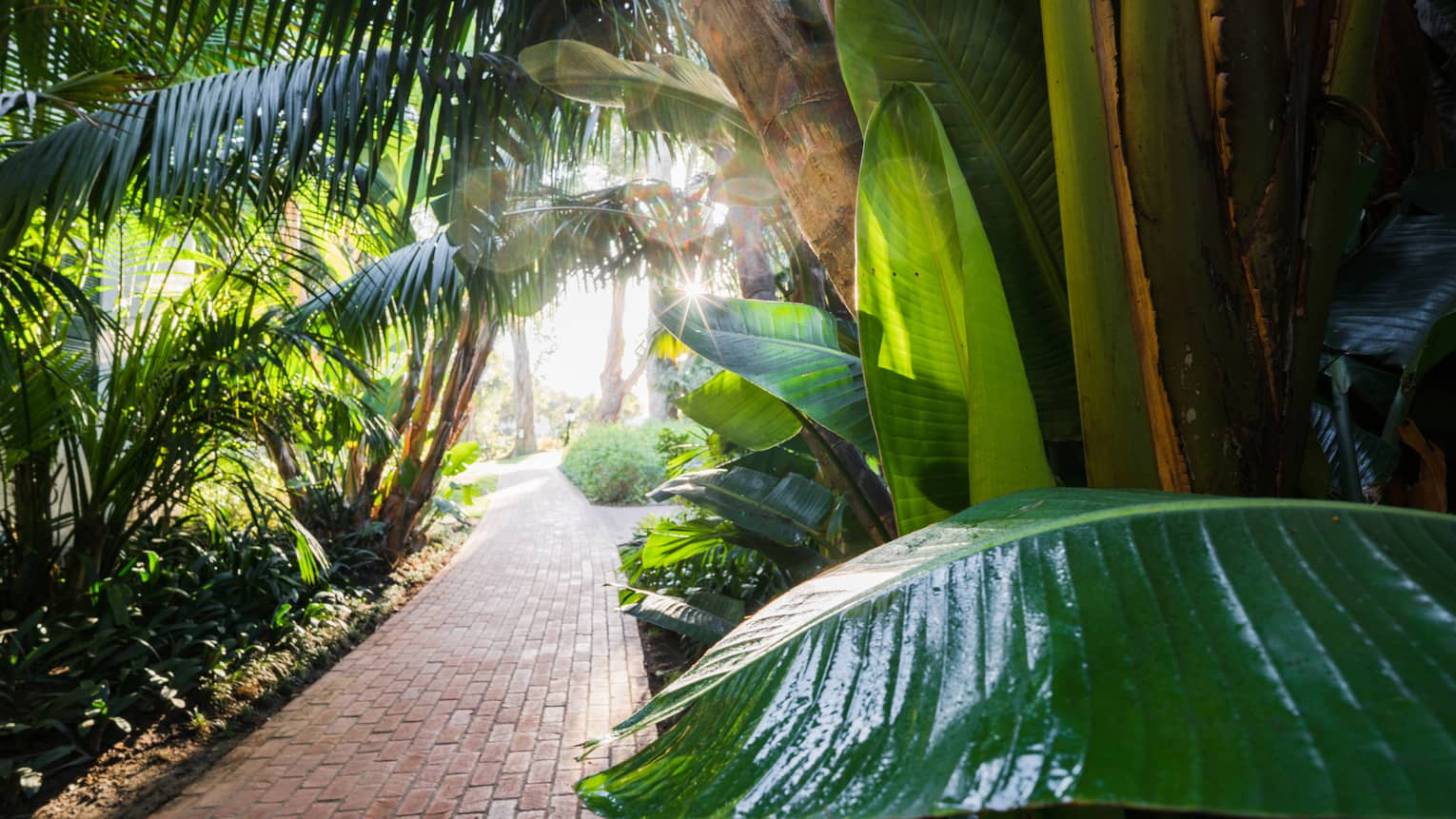 Large palm leaves over red brick path through sunny garden