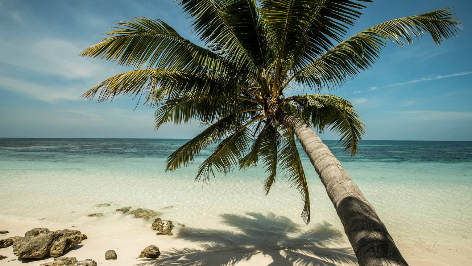 Long palm tree stretches over white sand beach and blue water