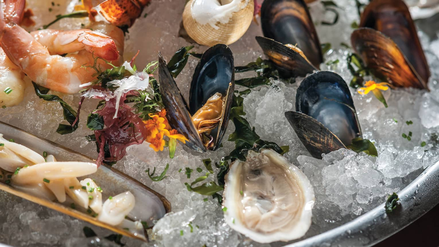 Cold shellfish platter, shrimp, oysters, mussels on ice