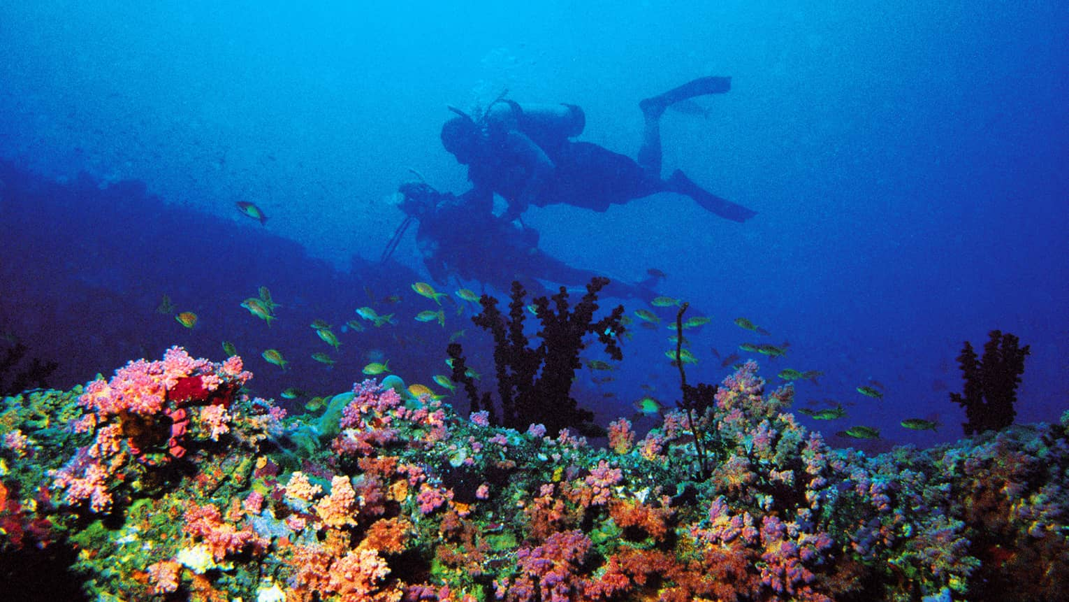Two scuba divers explore, colourful coral reef in the foreground