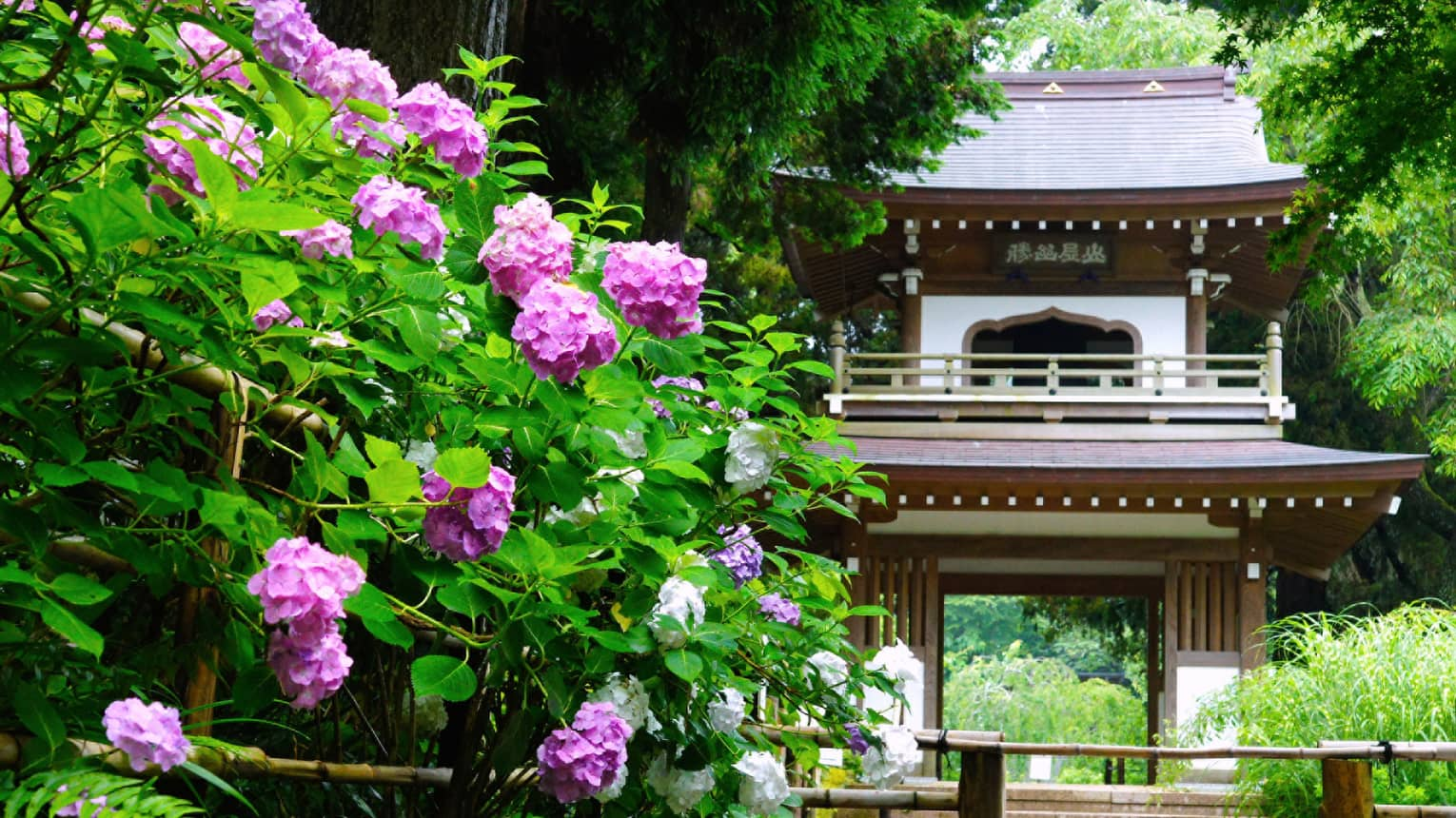 Wood temple entrance in garden by large bush with purple flowers