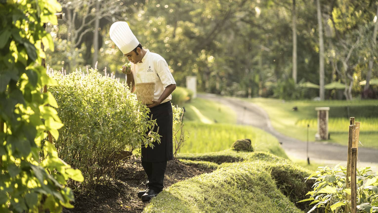 A chef collecting fresh vegetables and herbs from a garden to use in his creations