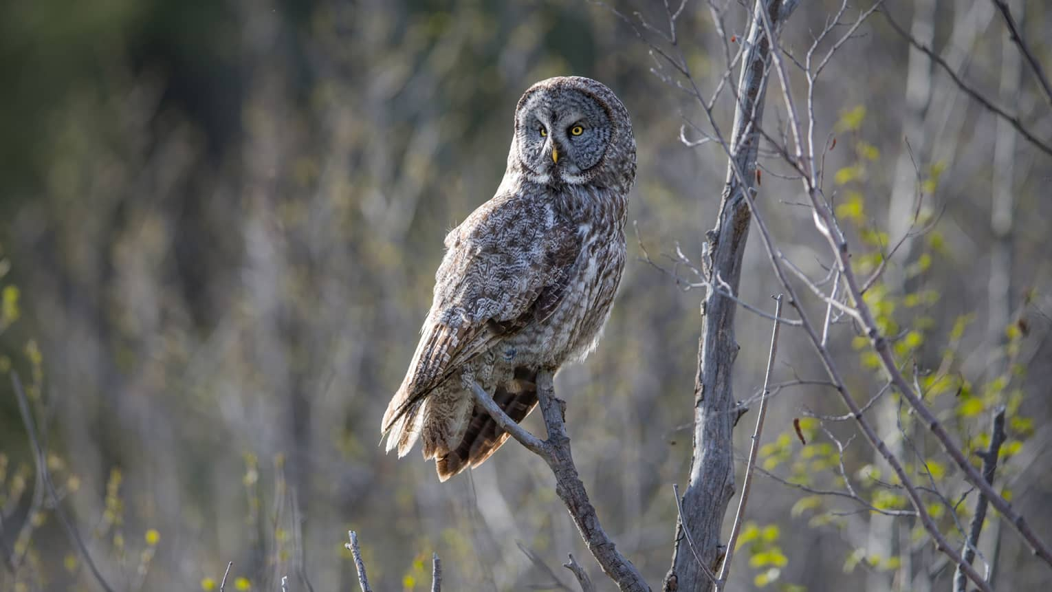 Large owl perched on branch in sunny forest