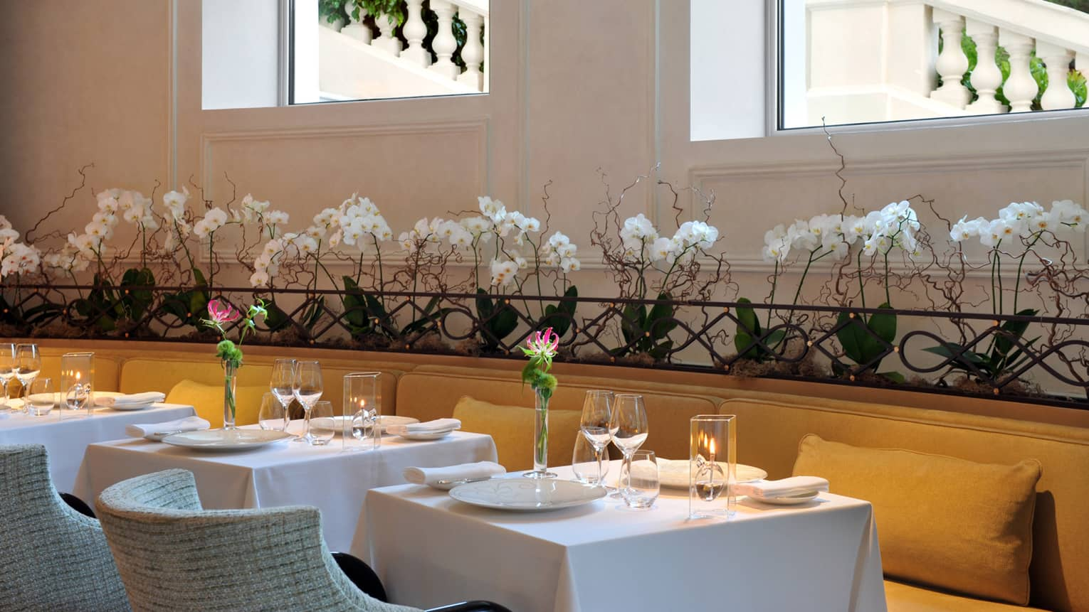 Le Cap dining tables, chairs under row of white orchids, windows