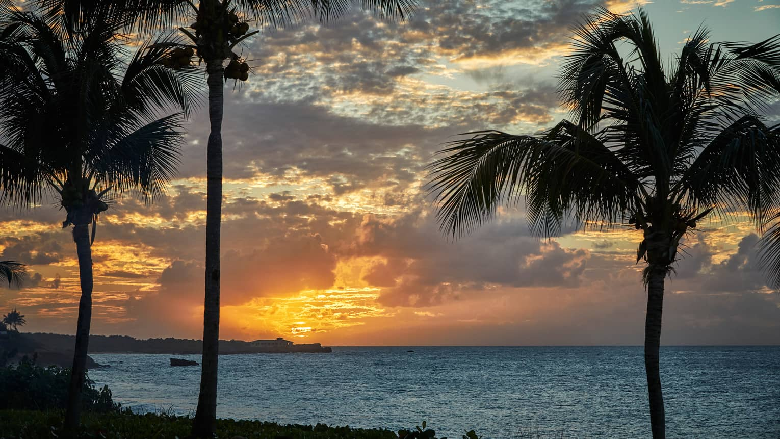 Silhouette of three tall palm trees against sunset, ocean