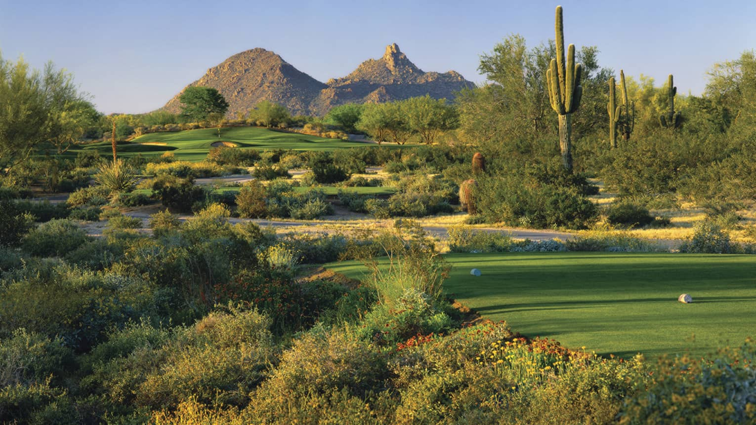 Troon North Golf Club greens, shrubs, tall cactus, mountain in background