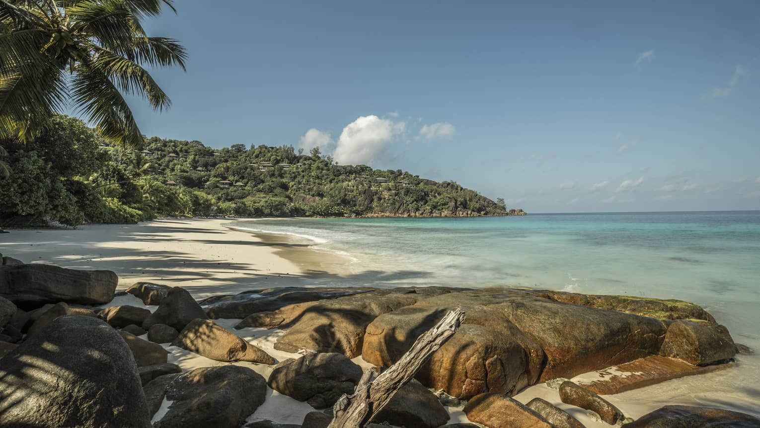 A rocky beach adorned with palm trees and a tropical forest