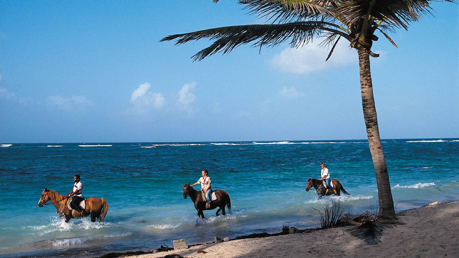 Three people ride horses through water along beach under palm tree