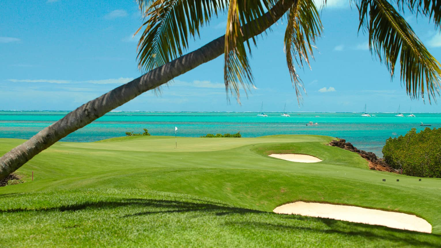 Palm tree hangs over golf course green, turquoise ocean in background