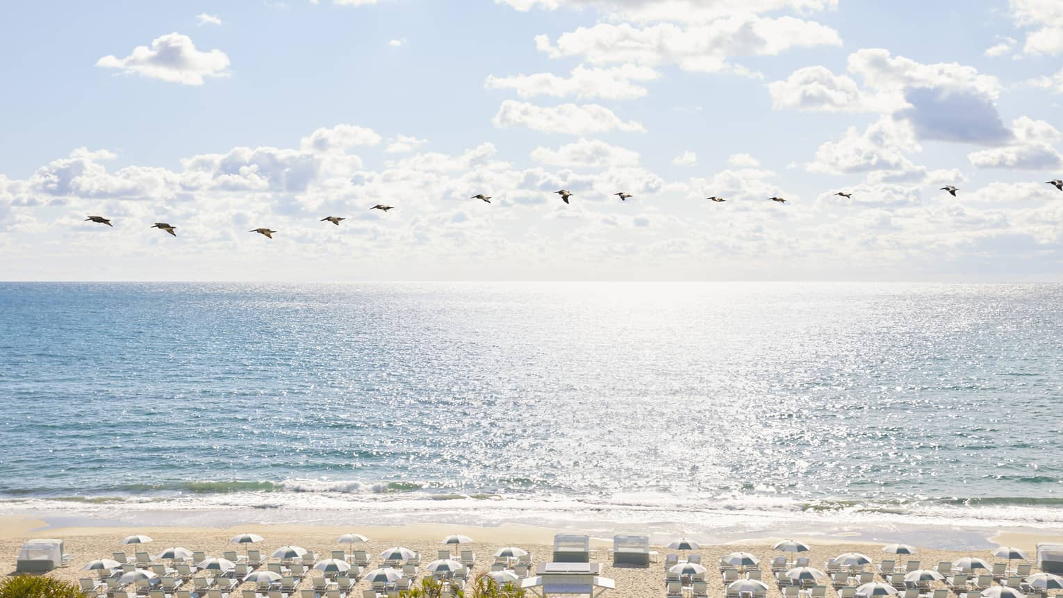 Birds fly across the sky in front of a sparkling ocean
