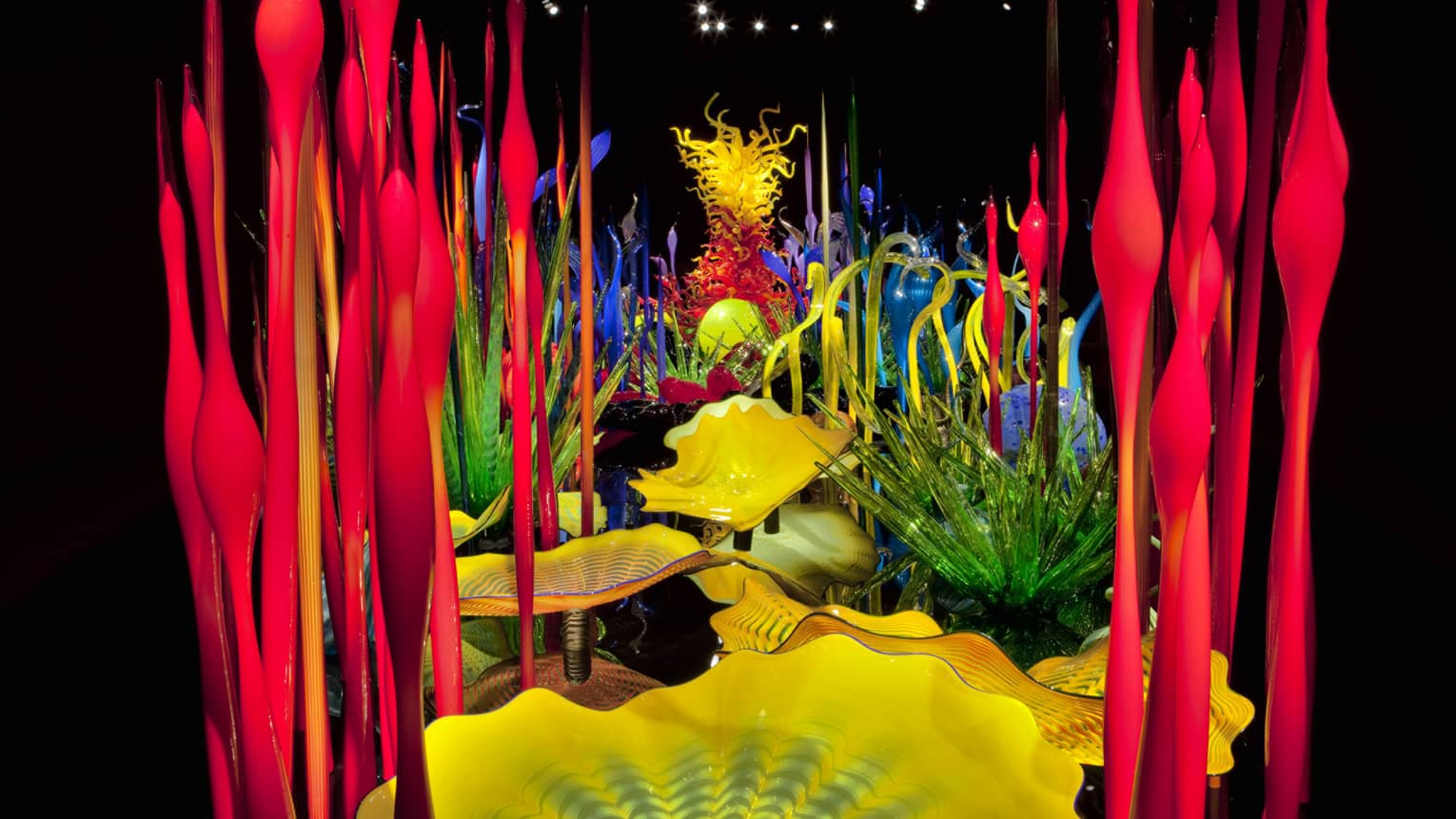 Colourful glass Chihuly sculptures in art exhibit