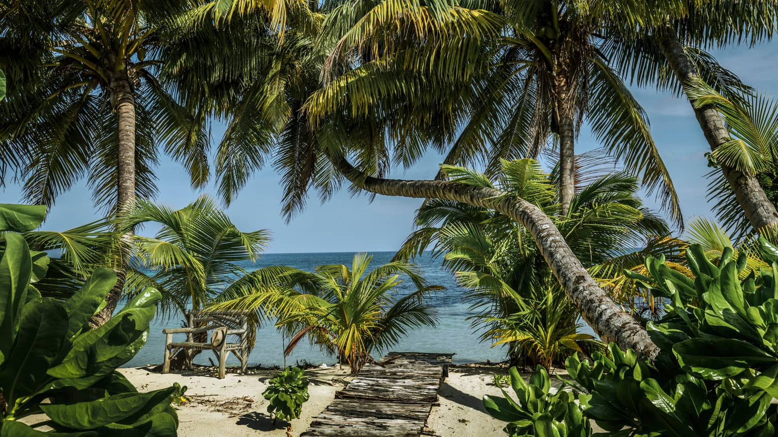 Palm trees with large leaves hang over sandy beach, walkway on sunny day