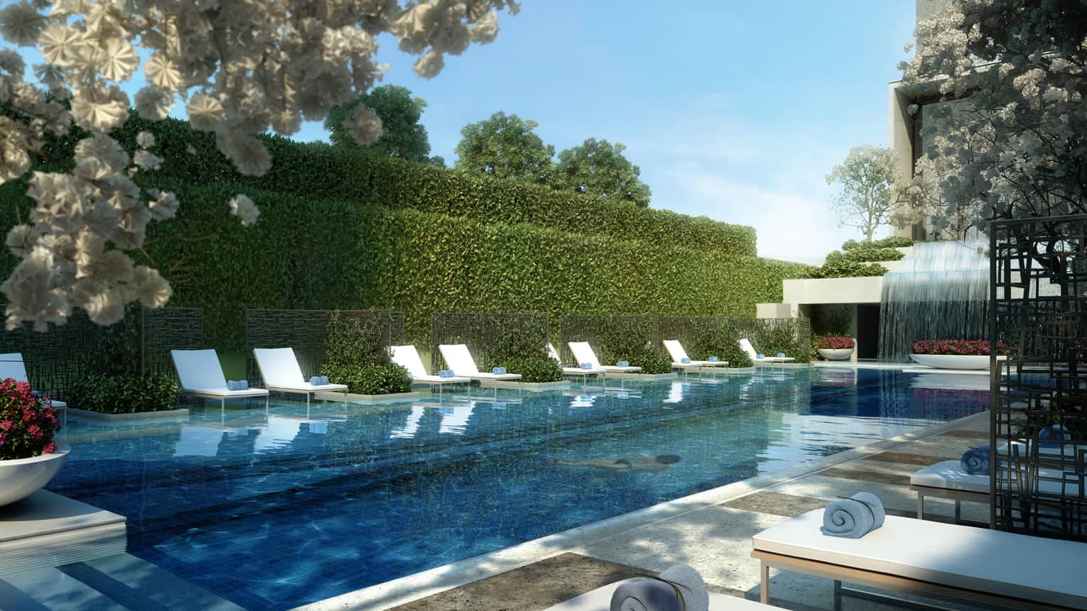 Wall of shrubs, white lounge chairs around outdoor swimming pool