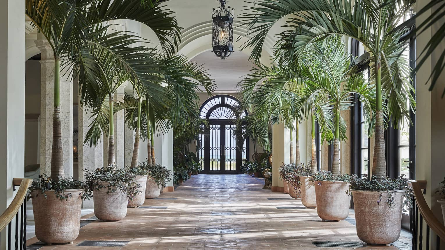 Hotel corridor flanked on either side by rows of potted palms, French doors at the far end
