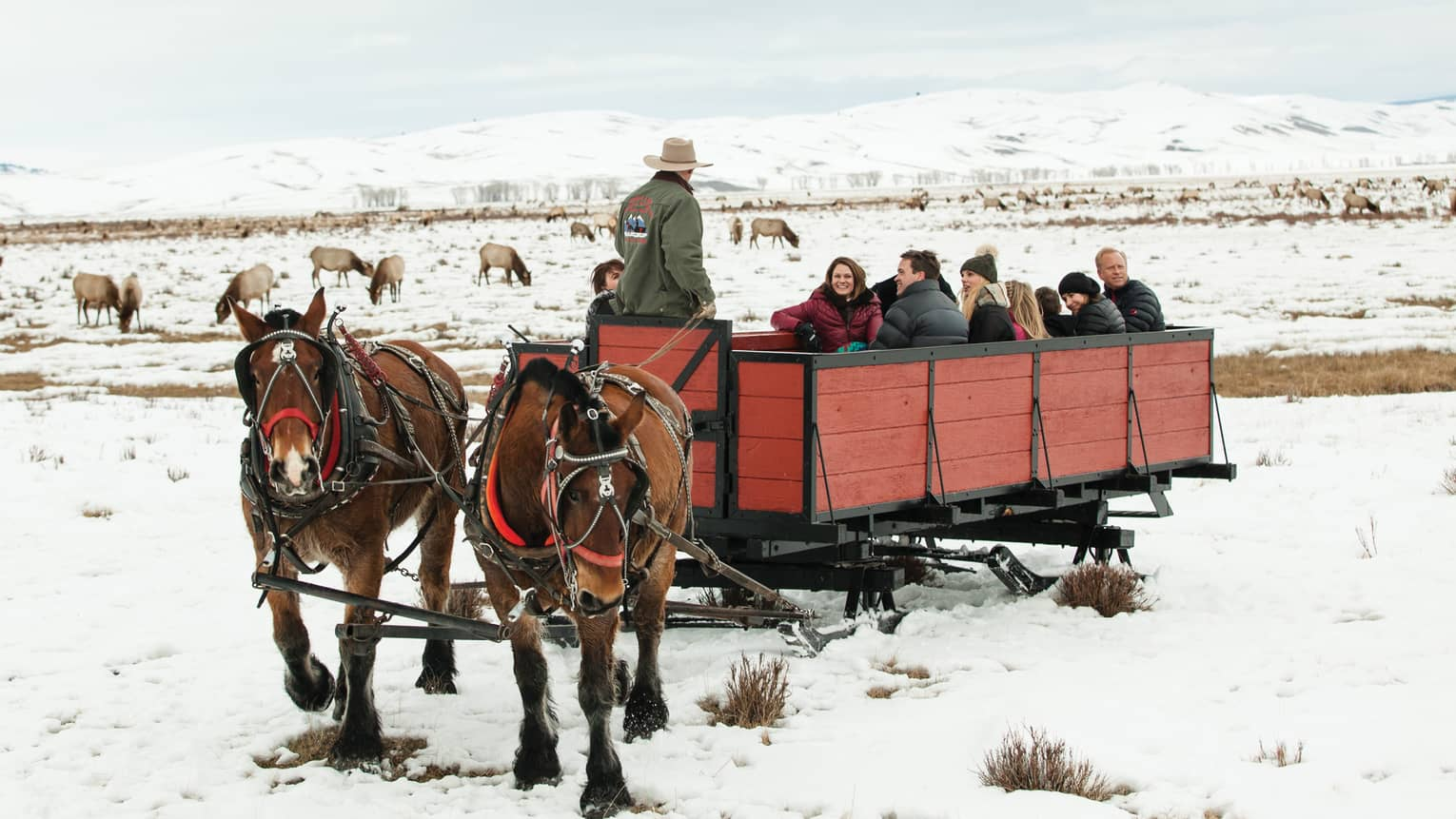 Group of friends in large red sleigh pulled by two horses, elk grazing on snow in background