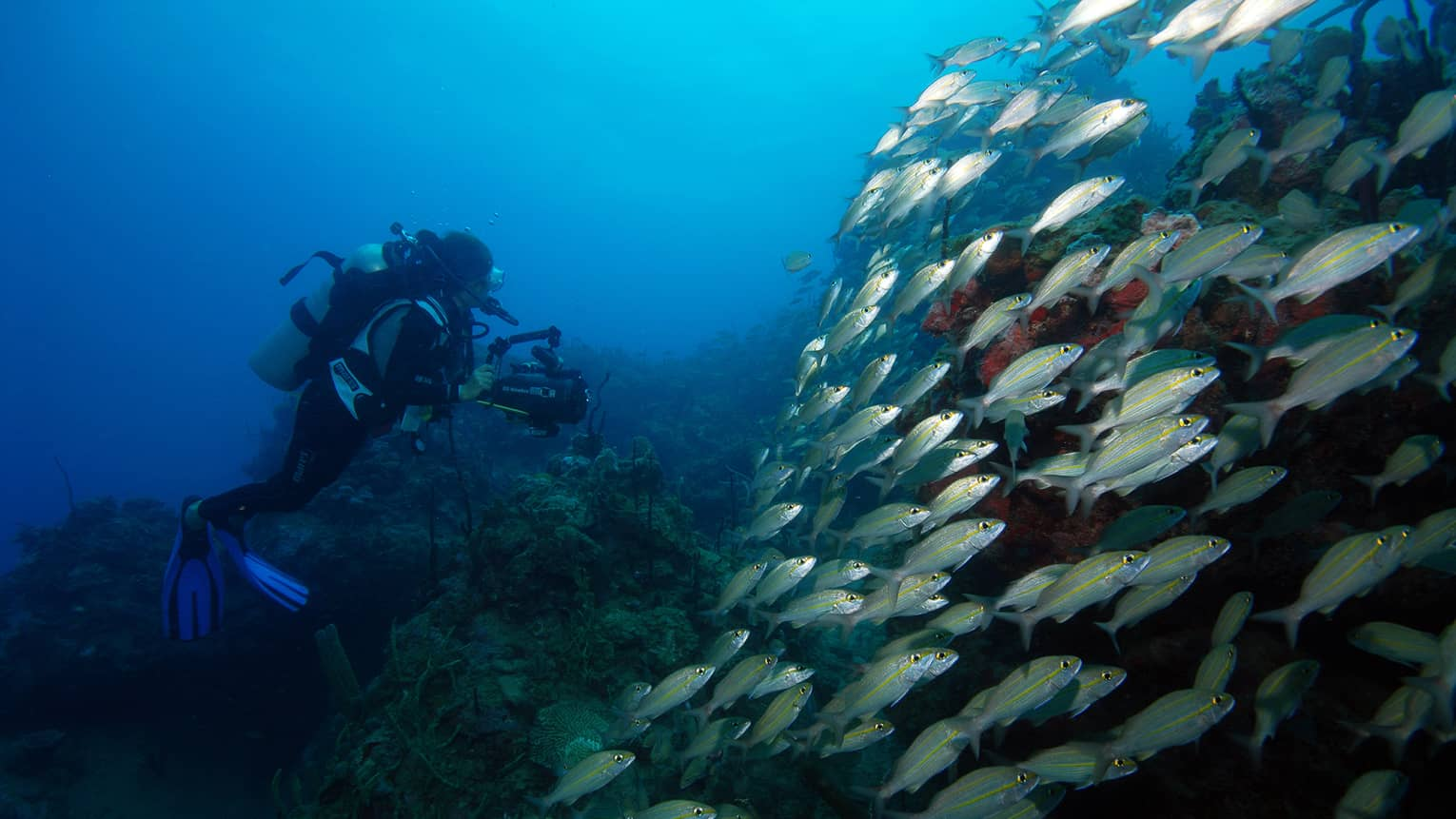 Scuba diver underwater by large school of tropical fish