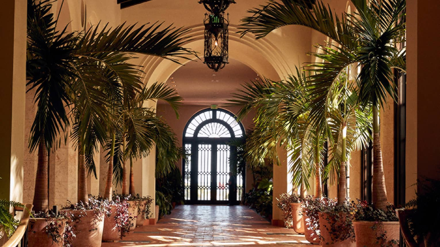 Hotel corridor flanked on either side by potted palms, French doors at the far end