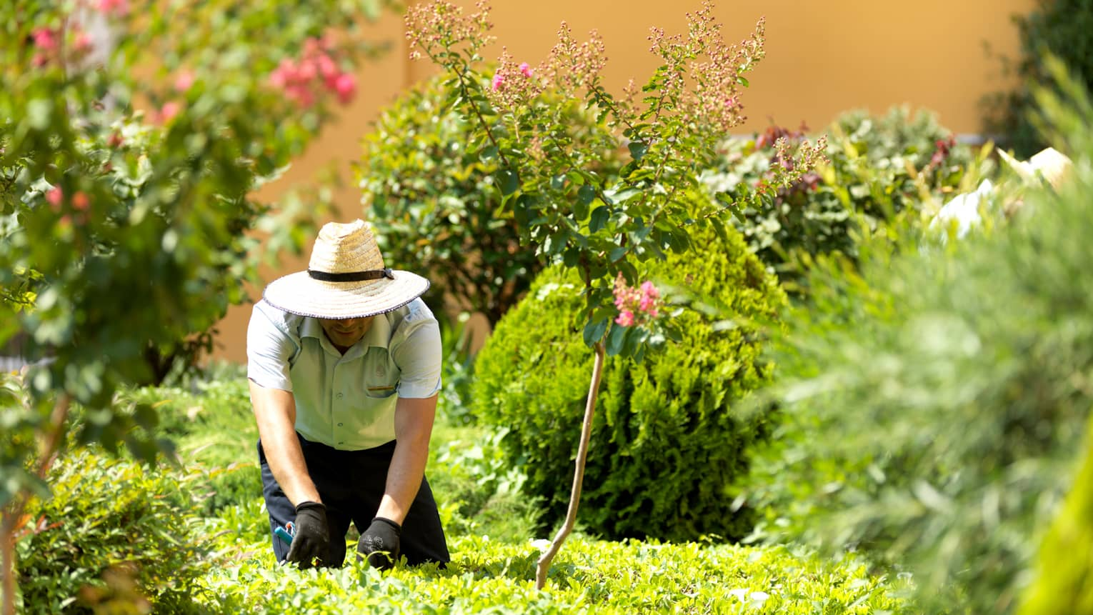 Gardener in straw hat kneels on grass in garden