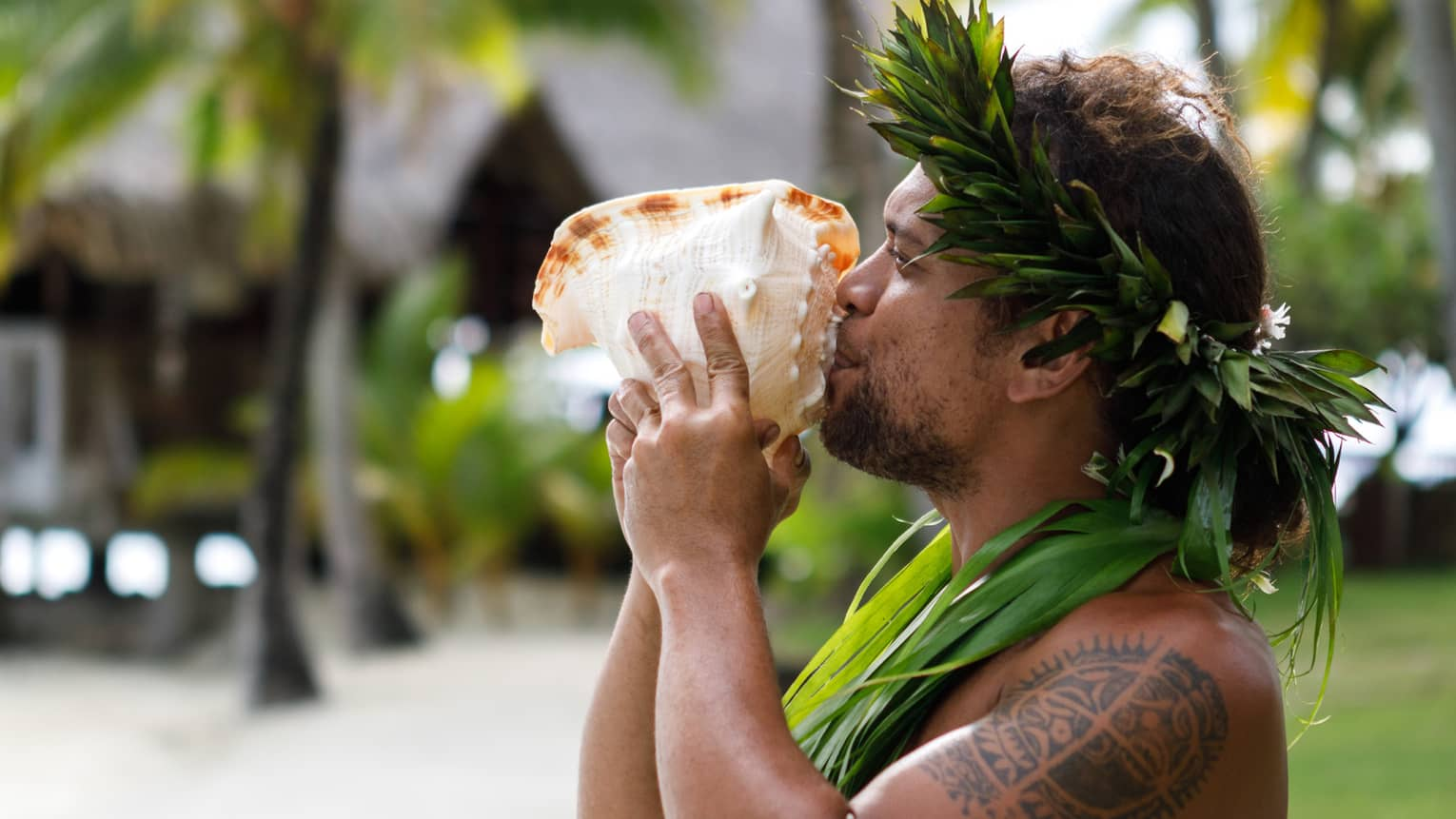 Tahitian man holds large sea shell to his lips on resort garden path