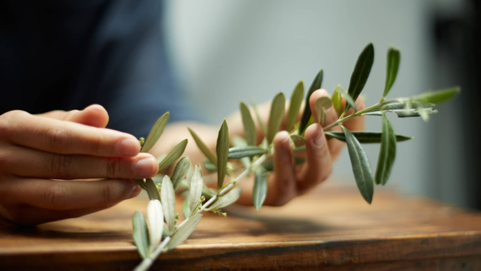 Close-up of hands holding branch with green leaves, herbs