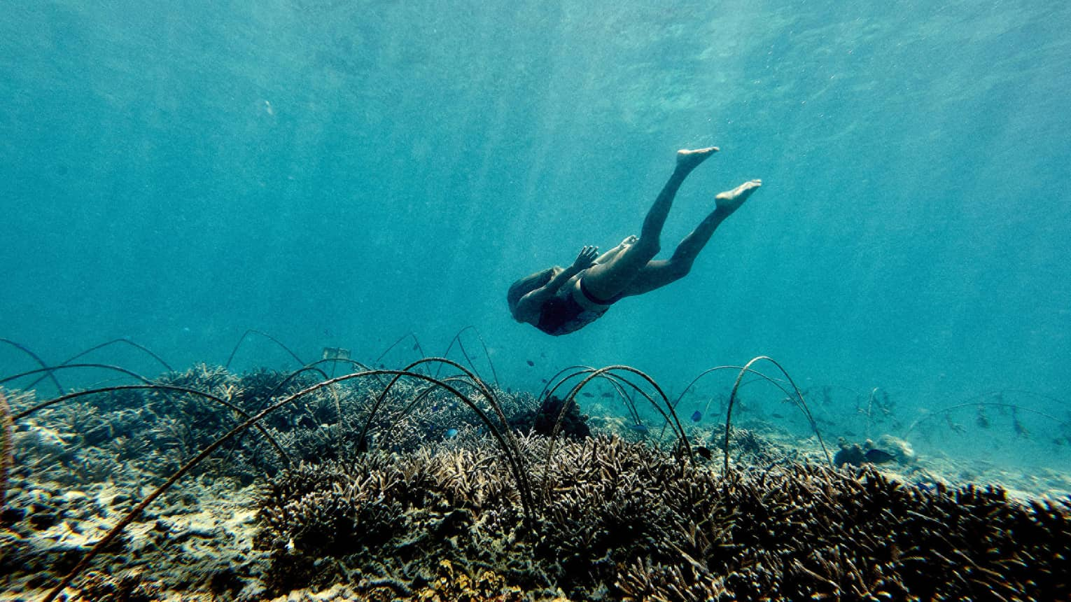 Underwater view of woman diving down to coral reef
