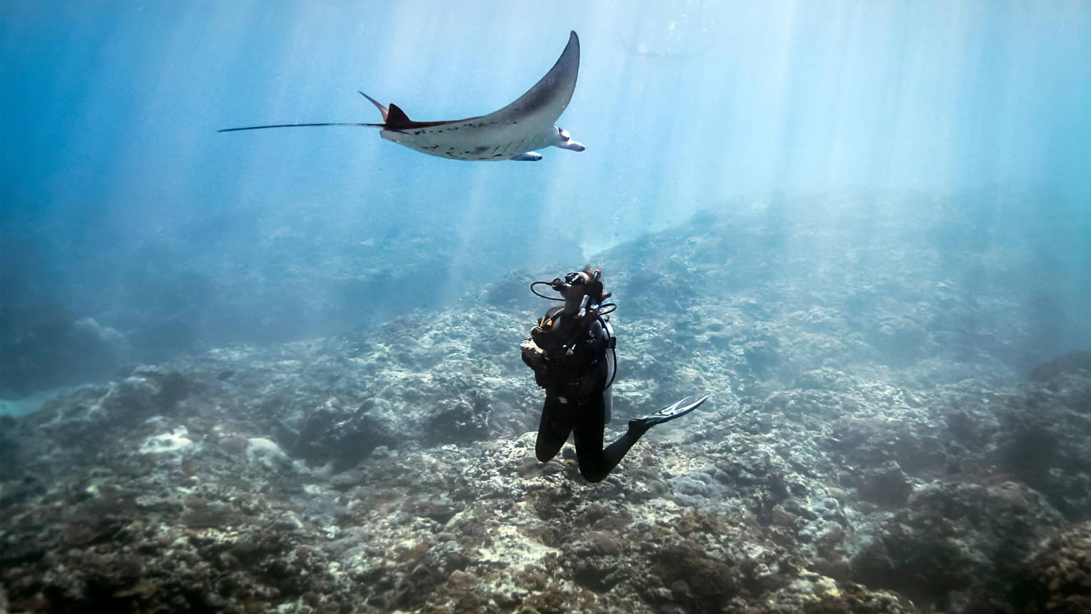 Scuba diver underwater above coral reef, looking up at manta ray