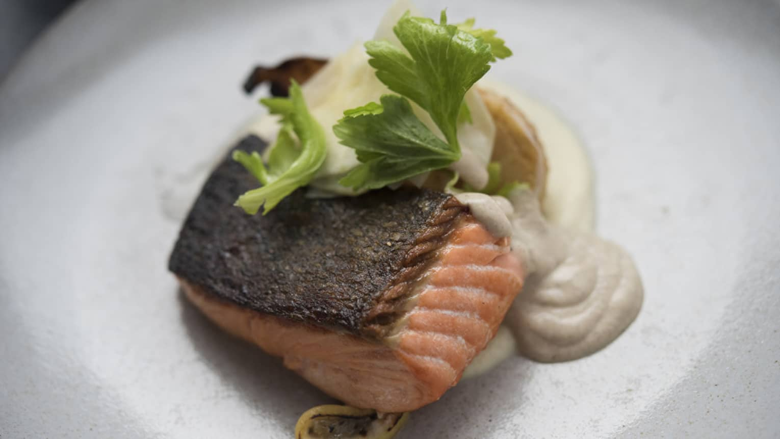 Pan seared salmon with potato puree on white plate