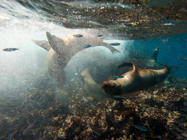 Marine life in Galapagos Islands