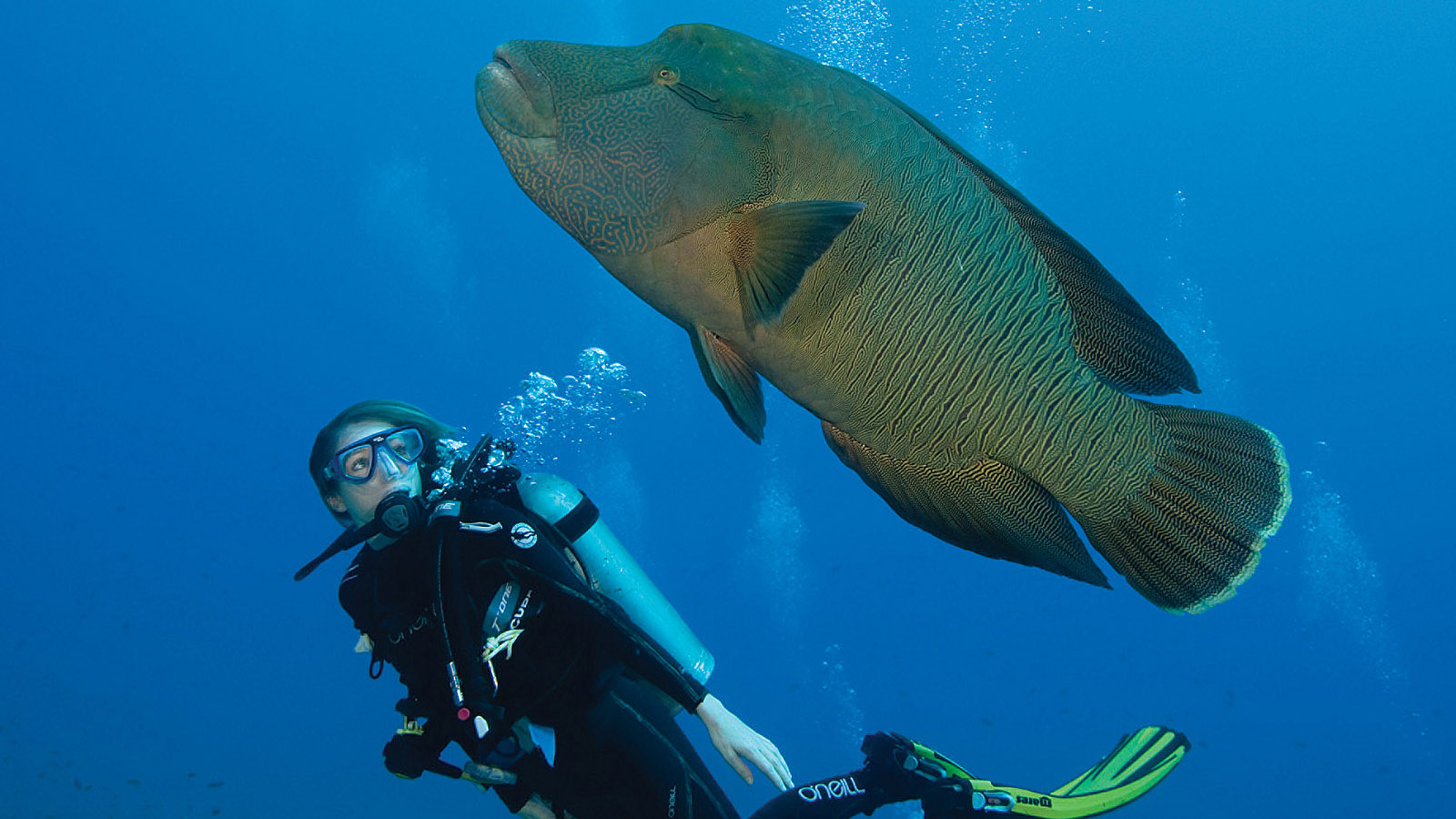 Dive Discovery Package Offered at Four Seasons Resort Maldives at Kuda Huraa, a 5-Star Resort in the Maldives