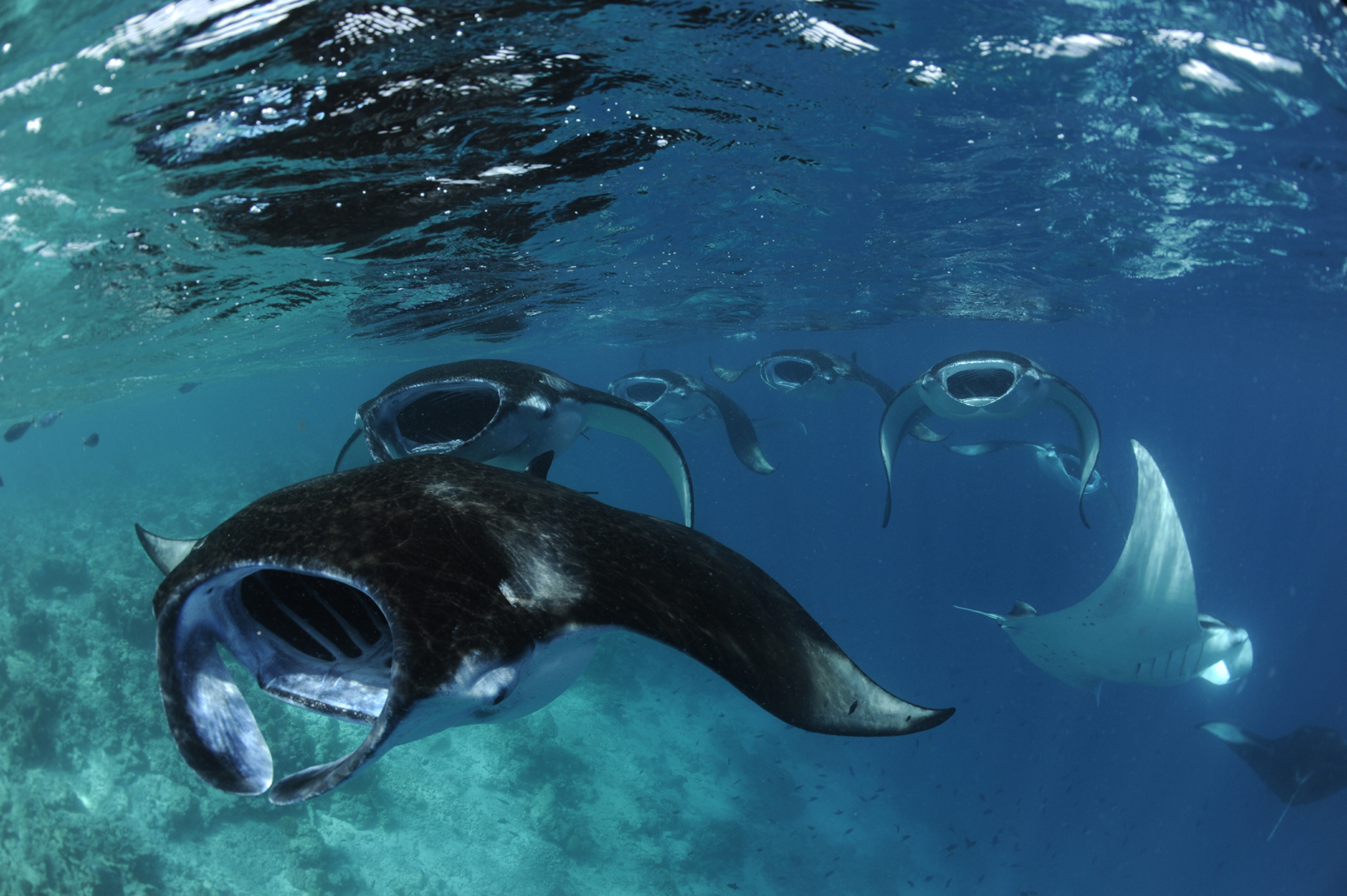 manta trust expeditions