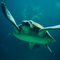 Sea Turtle Adventures